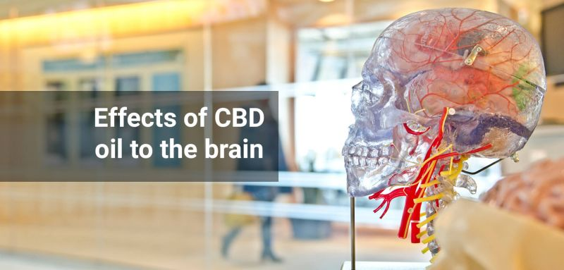 CBD effects on brain