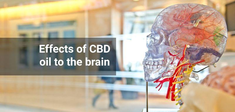 CBD effects on brain